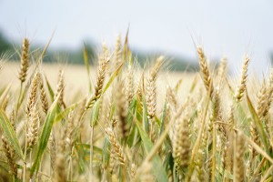 prodaja poljoprivrednog zemljišta, prodaja zemlje strancima