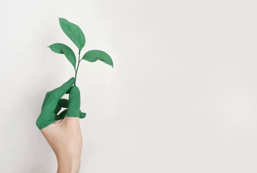 Zelena ekologija