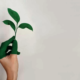 mala zelena ekologija